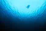 Green sea turtle, Sipadan Island, Malaysia