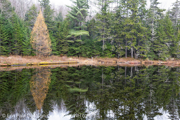 Black Pond on the side of Black Pond Trail in Lincoln, New Hampshire USA during the autumn months