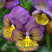 Gisela, FLOWERS, BLUMEN, FLORES, photos+++++,DTGK2499,#f#, EVERYDAY