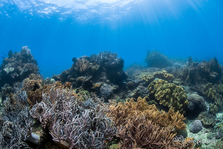 Sunrays with nice coral reef in Sulawesi, Indonesia