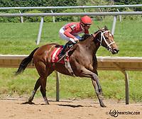 Queen Bee Teresa winning at Delaware Park on 6/5/13