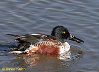 0721-0802  Male Northern Shoveler, Anas clypeata © David Kuhn/Dwight Kuhn Photography