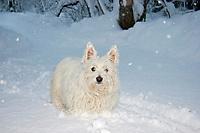 dog at snowfall