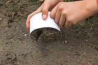 Kinder gießen Tierspur aus Gips, Mädchen hebt mit Gips gefüllten Ring aus Karton über dem Trittsiegel, der Fußspur von einem Reh vorsichtig vom Boden ab