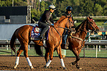 ARCADIA, CA  OCTOBER 30: Breeders' Cup Filly & Mare Sprint entrant Heavenhasmynikki, trained by Robert B. Hess Jr.  exercises in preparation for the Breeders' Cup World Championships at Santa Anita Park in Arcadia, California on October 30, 2019.  (Photo by Casey Phillips/Eclipse Sportswire/CSM)