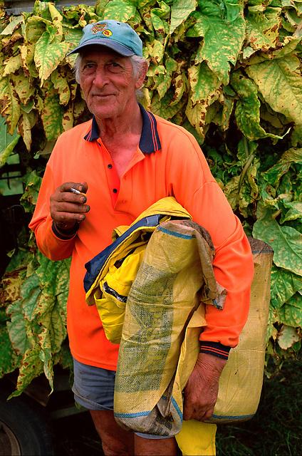 Days Work Done 1, Lui Falcomer, Schincariol's Farm, Dimbulah, 2003.