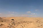 T-087 Acacia Tree in the Negev Desert