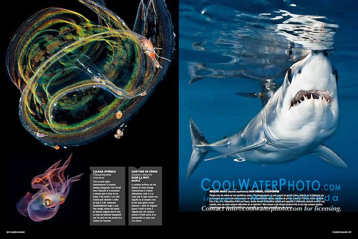 Plongée Magazine, December 2013, Photographer Portfolio, France, Image ID: 110526-0251, 130321-0139, Mako-Shark-Shortfin-0009-C