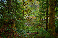 Sol Duc River.  Olympic Peninsula, Washington.  Sept.
