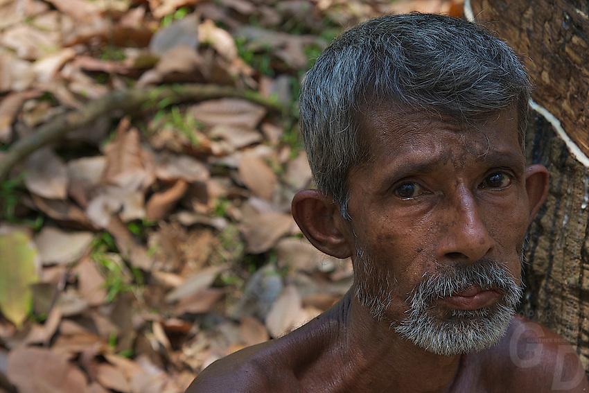 Worker at a Rubber Tree Plantation on the Road to Dambulla Sri Lanka, Rubber Tree Farmer