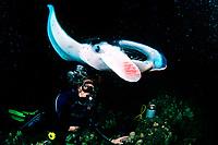 scuba diver and reef manta ray, Mobula alfredi, feeding at night, Kona, Big Island, Hawaii, Pacific Ocean