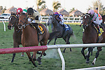 Twilight Eclipse with Jose Lezcano up powers home in the Mac Diarmida(G2T) at Gulfstream Park, Hallandale Beach Florida. 02-15-2014