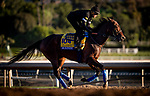 OCT 26: Breeders' Cup Classic entrant McKinzie, trained by Bob Baffert,  gallops  at Santa Anita Park in Arcadia, California on Oct 26, 2019. Evers/Eclipse Sportswire/Breeders' Cup