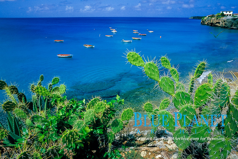 fishing boats at West Point Bay, Curacao, Netherland Antilles or Dutch ABC Island, Caribbean, Atlantic