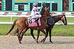 NEW ORLEANS, LA - MARCH 26:  Land Over Sea #8 ridden by John R. Velazquez in the post parade and wins the Fair Grounds Oaks during the Louisiana Derby at Fairgrounds Race Course on March 26, 2016 in New Orleans, Louisiana. (Photo by Steve Dalmado/Eclipse Sportswire/Getty Images)