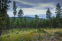 Kootenai National Forest Montana and Lake Koocanusa down in the Tobacco Valley