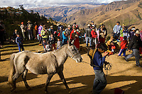 A boy prepares to race his horse as part of festivities for the Yawar Fiesta in the Peruvian Andes on Independence Day.