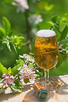 France, Calvados (14), Pays d' Auge, Cambremer , Cidre du Pays d'Auge// France, Calvados, Pays d' Auge, Cambremer, Pays d'auge cider, molly-coddled apple