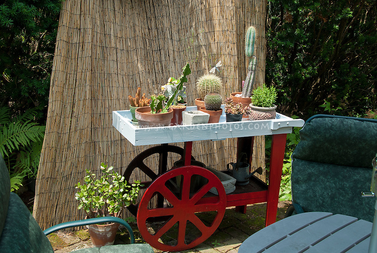 Container houseplants, cactus, ourdoors, cart, cute, small space gardening