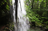 Emerald Pool waterfall from behind the fall, with the lush rainforest vegetation in the Commonwealth of Dominica island, Caribbean Leeward Islands