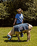 July 31, 2017. Chapel Hill, North Carolina.<br /> <br /> Ginger Holler keeps an eye on Rameses the Ram as he grazes outside the barn in which he lives. <br /> <br /> Holler is the wife of Don Basnight, one of the members of the Hogan family who have long been the caretakers of Rameses the Ram. The current Rameses is the 21st in the line of the University of North Carolina's live mascot.