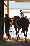 HALLANDALE BEACH, FL - JANUARY 21: Groom Raul Rodriguez cools out California Chrome in the shedrow after working 5 furlongs at Gulfstream Park. (Photo by Arron Haggart/Eclipse Sportswire/Getty Images