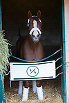 DEL MAR,CA-AUGUST 21: California Chrome at the barn at Del Mar Race Track on August 21,2016 in Del Mar,California (Photo by Kaz Ishida/Eclipse Sportswire/Getty Images)