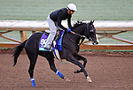 ARCADIA, CA - OCT 31: Big Score, owned by George Krikorian and trained by Tim Yakteen, exercises in preparation for the Breeders' Cup Juvenile Turf at Santa Anita Park on October 31, 2016 in Arcadia, California. (Photo by Scott Serio/Eclipse Sportswire/Breeders Cup)