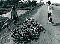Entenherde, Vietnam 1991