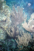 Coral formation<br />