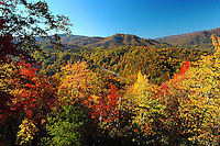 Autumn leaves make a colorful tapestry on the mountains in Avery County in the North Carolina Blue Ridge Mountains.