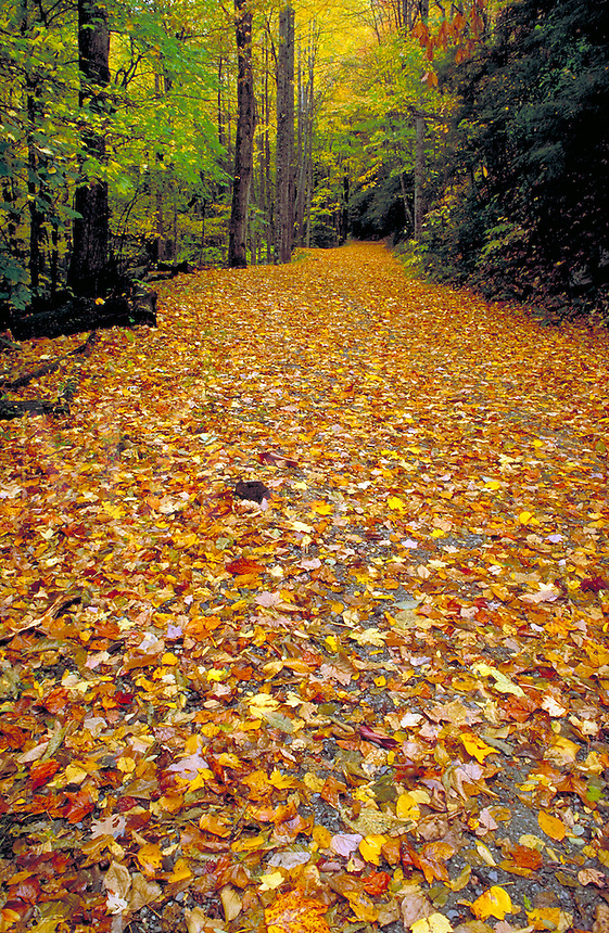 Autumn leaves on mountain trail path near Cades Cove. quiet, tranquil, peaceful, fall foliage, woods, forest, landscape. trail, path, leaves, walks, fall. Tennessee, Cades Cove.