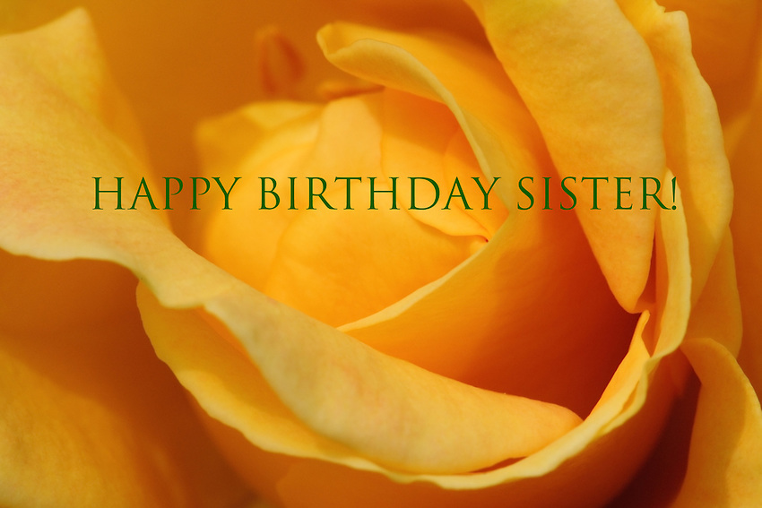 Joseph's Coat rose birthday card for sister.