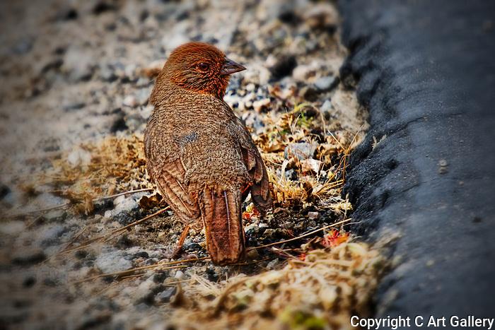 Cute Bird 1, Crystal Cove, CA