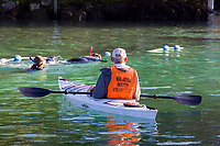 A Manatee Watch Volunteer keeps an eye out for curious snorkelers making sure they obey the laws regarding interactions with the endangered Florida Manatee. Three Sisters Sanctuary. Crystal River, Florida. ( no MR)