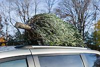 Christmas Tree Shopping 2015