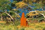 Termite Mound, Tarangire National Park, Tanzania