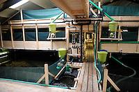 GERMANY , shrimp farm and biogas plant for power generation and heating of white tiger shrimps aquaculture in former pig stable / DEUTSCHLAND, Biogasanlage von Landwirt Heinrich Schaefer in Affinghausen, mit der Waerme wird eine Garnelenzucht in der ehemaligen Traktorenhalle betrieben, die White Tiger Garnelen werden unter dem Namen Marella Shrimps  direkt ab Hof per Versand vermarket