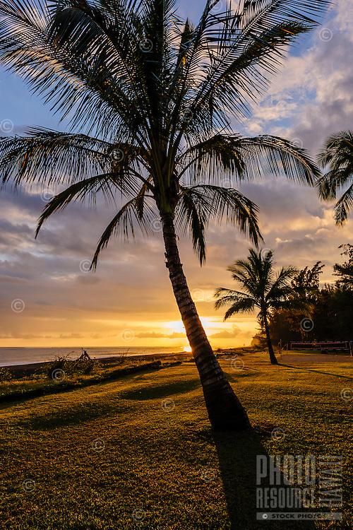 Sunset through palm trees along the Waimea coastline on Kaua'i.