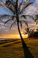 Sunset through palm trees along the Waimea coastline on Kaua'i.