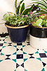Tangier, a waterjet stone mosaic shown in honed Bianco Antico with Indigo and Aloe Glazed Basalto.