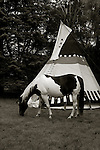 Paint horse in front of a tipi