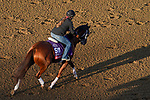 November 5, 2020: Manny Wah, trained by trainer Wayne M. Catalano, exercises in preparation for the Breeders' Cup Sprint at Keeneland Racetrack in Lexington, Kentucky on November 5, 2020. John Voorhees/Eclipse Sportswire/Breeders Cup/CSM