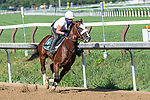 07252020:Tiz the Law works at Saratoga 2020 <br />