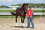 September 1, 2014: Smarty Jones Stakes contender Ain't Got Time enters the paddock. Protonico, Joe Bravo up, wins the grade 3 Smarty Jones Stakes at Parx Racing in Bensalem, PA. Trainer is Todd Pletcher. Owner is International Equities Holding, Inc. ©Joan Fairman Kanes/ESW/CSM