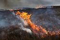 Controlled burning of heather moorland, Derwent Edge, Peak District National Park, Derbyshire, UK. March 2015.