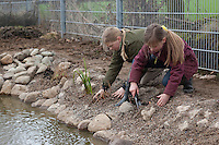 Grundschulklasse, Schulklasse legt einen Schulteich, Schul-Teich, Gartenteich, Garten-Teich im Schulgarten an, Mädchen, Kinder pflanzen die ersten kleinen Wasserpflanzen am Uferrand des neu angelegten Teiches ein, als Substrat dient feinkörniger Kies