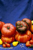 HS09-061x  Tomato - heirloom tomatoes - striped German, Pruden purple, Cherokee purple, red and yellow pear varieties
