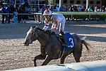 March 27, 2021: Crazy Beautiful #3, ridden by jockey Jose Ortiz, wins the Gulfstream Park Oaks (Grade 2) on Florida Derby Day at Gulfstream Park in Hallandale Beach, Florida. Liz Lamont/Eclipse Sportswire/CSM