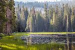 A small lake on the Tioga Road, Yosemite National Park, CA, USA